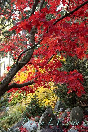Finally fall color_8322