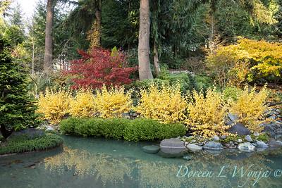 Finally fall color_8304