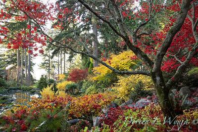 Finally fall color_8317