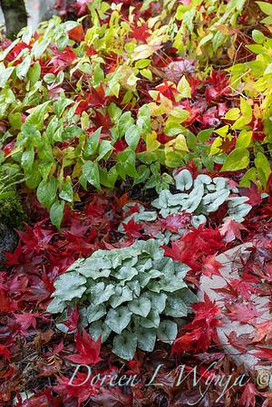 Finally fall color_8320
