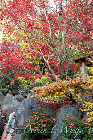 Finally fall color_8311