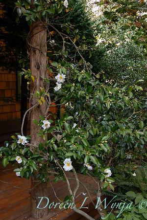 Whit & Mary's garden_7871
