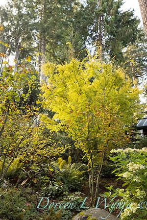 Whit & Mary's garden_7863