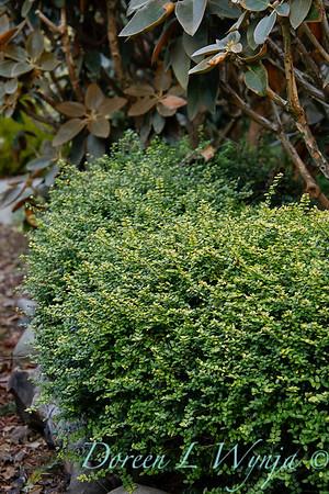 Whit & Mary's garden_7836