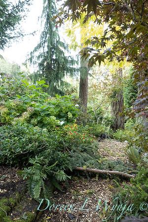 Whit & Mary's garden_7856
