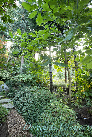 Whit & Mary's garden_7848