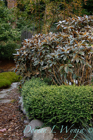 Whit & Mary's garden_7835