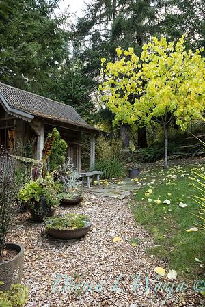 Whit & Mary's garden_7858