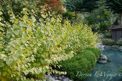 Whit & Mary's garden_7840