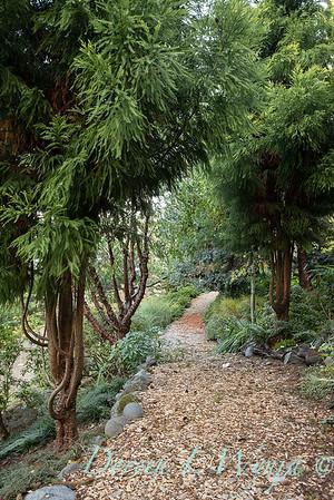 Whit & Mary's garden_7857