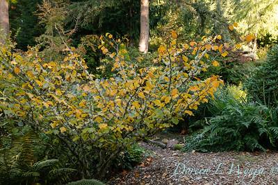 Whit & Mary's garden_7834