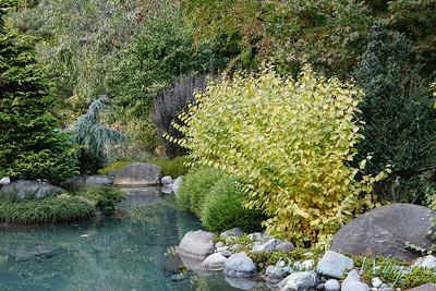 Whit & Mary's garden_7843