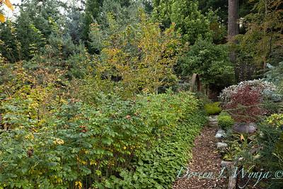 Whit & Mary's garden_7862