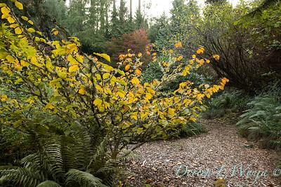 Whit & Mary's garden_7833