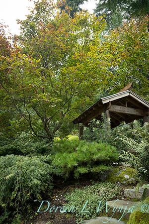 Asian Fusion garden_7237
