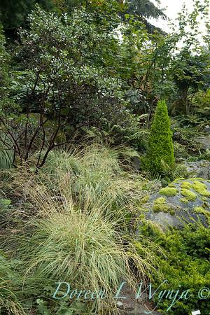 Asian Fusion garden_7206