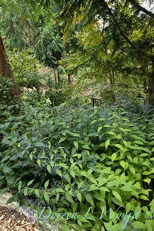 Asian Fusion garden_7241