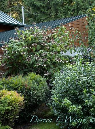 Whit & Mary Garden_6541