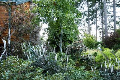 Whit & Mary Garden_6500
