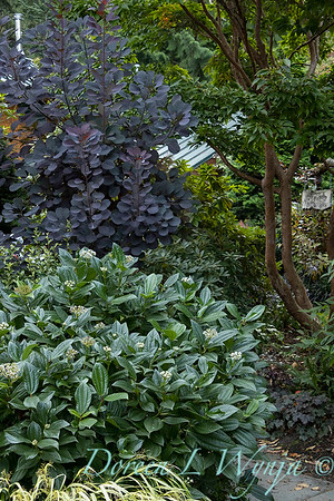 Whit & Mary Garden_6517