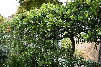 Lisa Bauer - designer's garden_1239