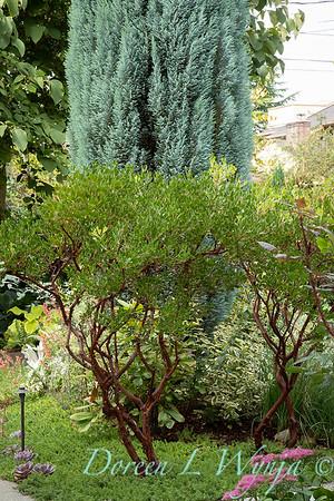 Lisa Bauer - designer's garden_1219