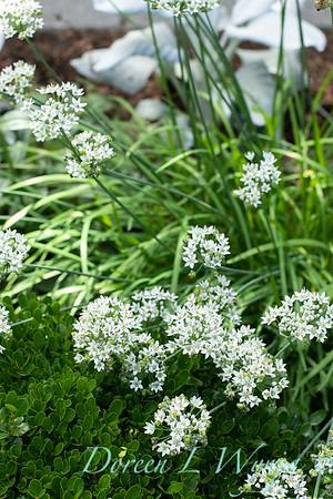 Lisa Bauer - designer's garden_1237