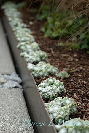Lisa Bauer - designer's garden_1208