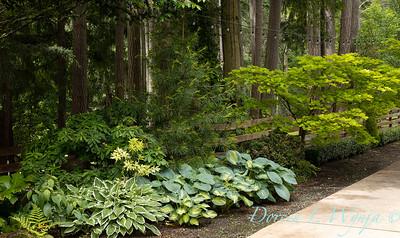Froggsong Gardens_6002