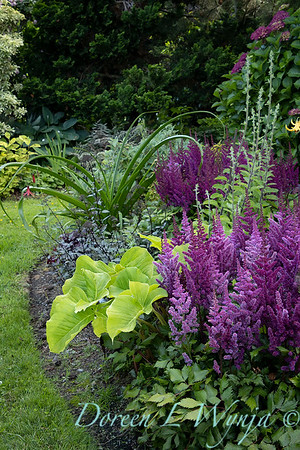 Astilbe chinensis 'Vision in Red' with Arisaema amurense landscape_6972