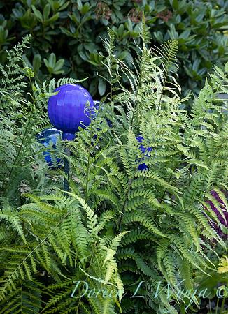 Blue glass globes in a fern bed_6856