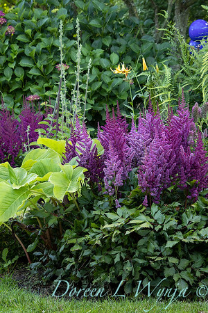 Astilbe chinensis 'Vision in Red' with Arisaema amurense landscape_6971