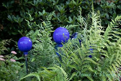 Blue glass globes in a fern bed_6855