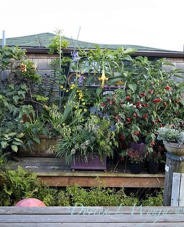 Bob Lily houseboat gardening_616