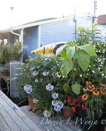 Houseboat garden_1130