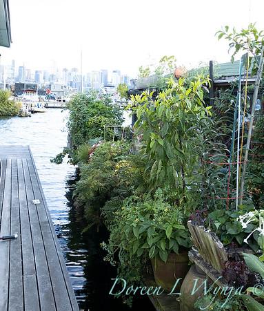Bob Lily houseboat gardening_623