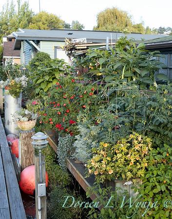 Bob Lily houseboat gardening_611