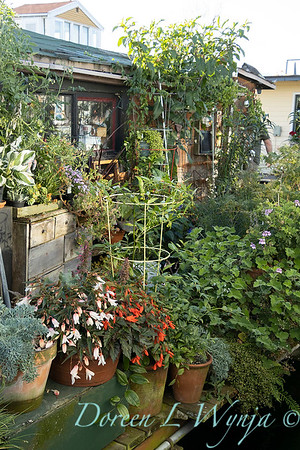 Bob Lily houseboat gardening_621