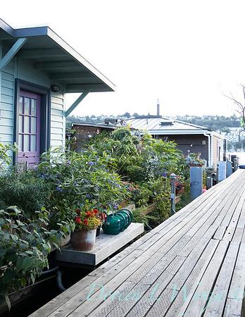 Bob Lily houseboat gardening_627