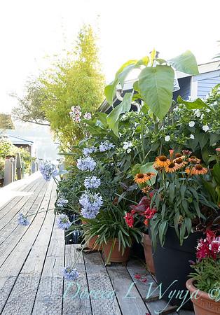 Houseboat garden_1129