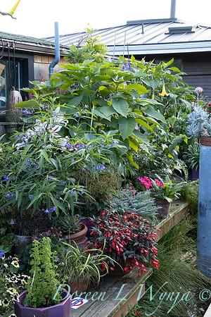 Bob Lily houseboat gardening_601