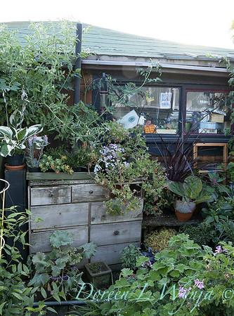 Bob Lily houseboat gardening_620