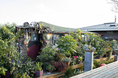 Bob Lily houseboat gardening_600