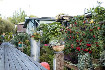 Bob Lily houseboat gardening_608