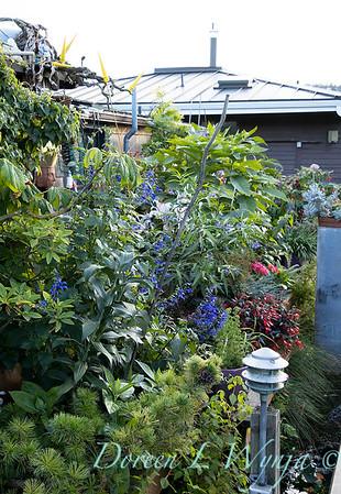Bob Lily houseboat gardening_602
