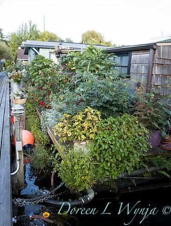 Bob Lily houseboat gardening_610