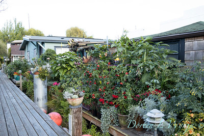 Bob Lily houseboat gardening_607