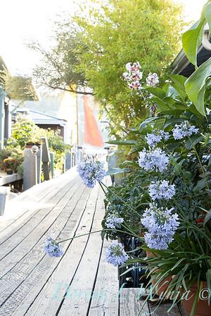 Houseboat garden_1128