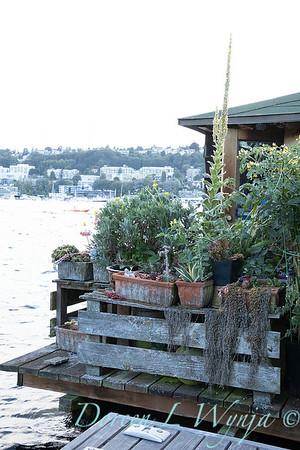 Bob Lily houseboat gardening_625