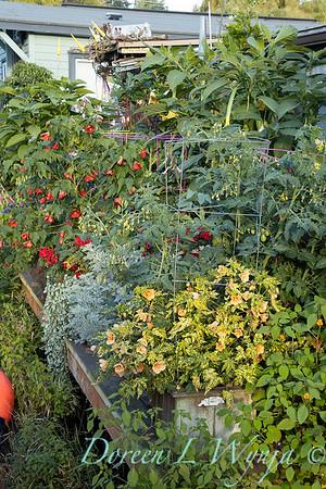 Bob Lily houseboat gardening_612